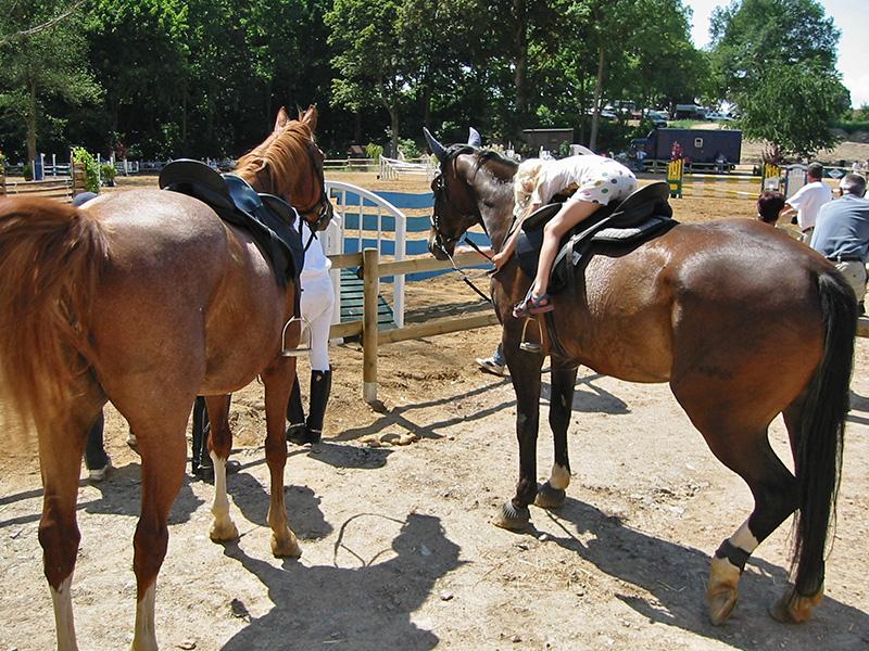 Tourismus- und Freizeitzentrum Seeberg - Pferde im Pferdehof
